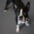 Dog Blog Coming Soon!